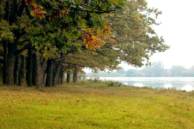 初秋の川の近くの森の木々