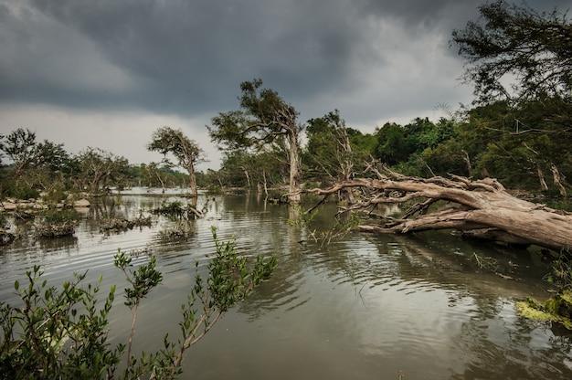 メコン川の島々にある木々。