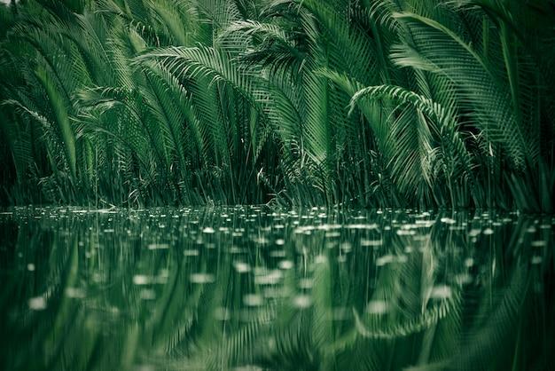 맹그로브 숲에있는 나무