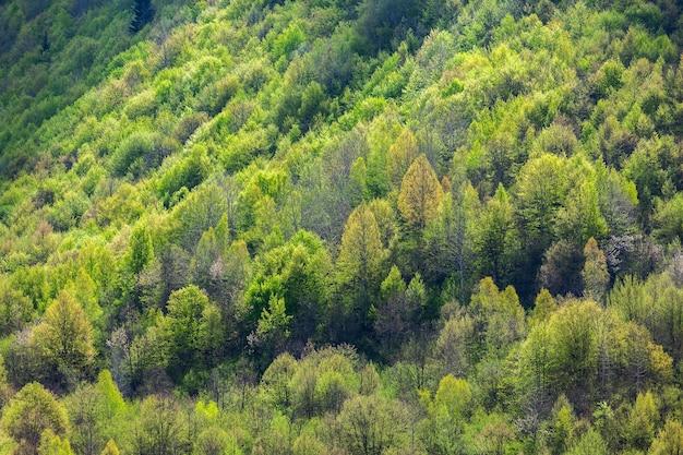 スヴァネティの山の中の木。美しい夏の風景