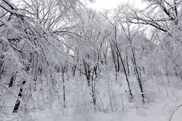 Деревья в парке покрыты снегом, на снегу могут быть следы людей.