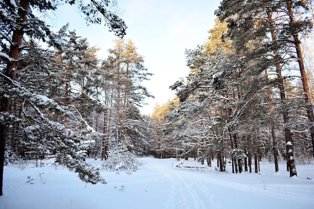 Деревья в снегу в зимнем лесу
