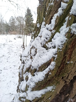 雪の中の木。ウィンターパーク。