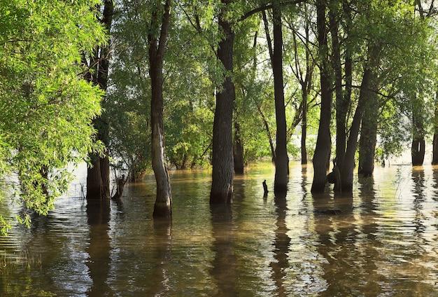 春の水の中の木