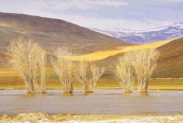 강물에 있는 나무 추야강의 높은 물에서 봄에 알몸 식물