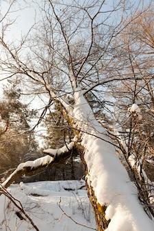 Деревья в зимний сезон Premium Фотографии