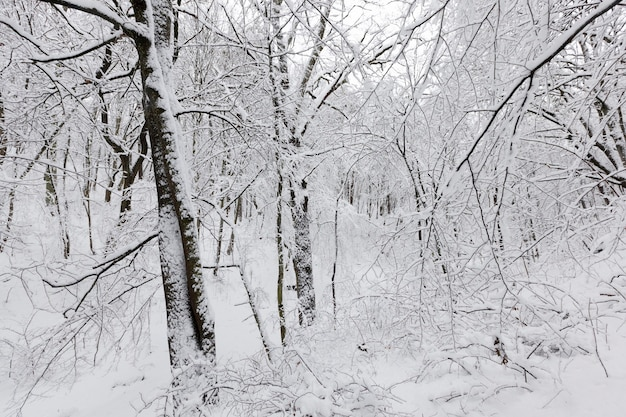 Деревья зимой Premium Фотографии