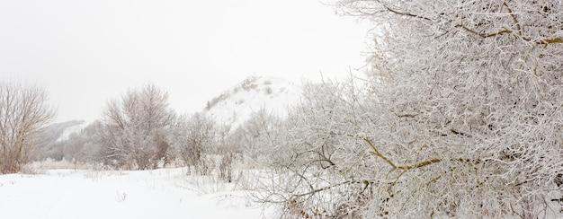 서리가 덮여 숲 속의 나무들