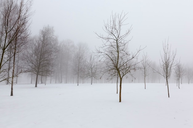 冬の凍った風景の木