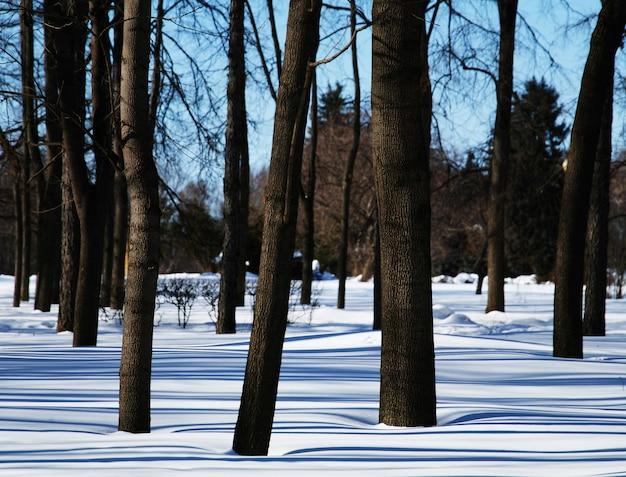 ウィンターパークの背景の木々hd