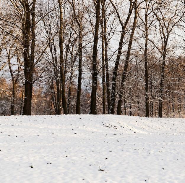 겨울에 나무, 서리가 내린 날씨에 근접 촬영.