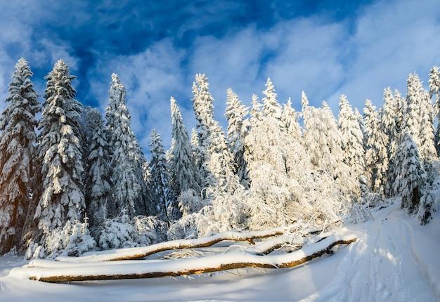 Деревья зимой