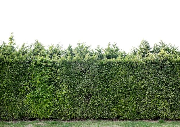 白い背景で隔離の木。切り取ってパスします。建築や装飾の自然なデザインに使用します。地球を救う植物で命を救う、世界環境デー