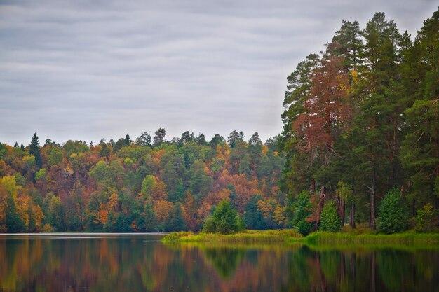 Trees at lake shore
