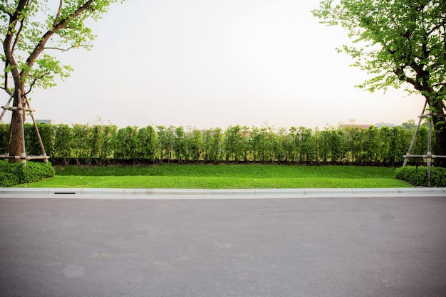 Trees on lawn with a white background