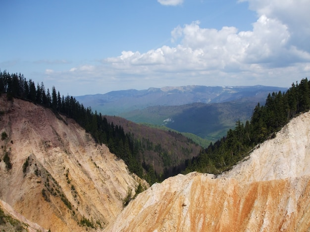 Alberi sulle montagne del parco naturale apuseni in romania