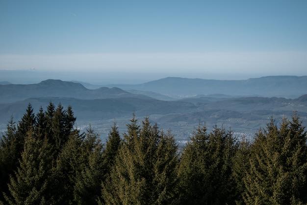 Alberi e montagne durante il giorno