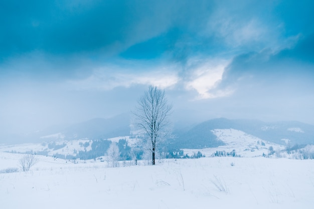 Trees in the mountains. winter mountains