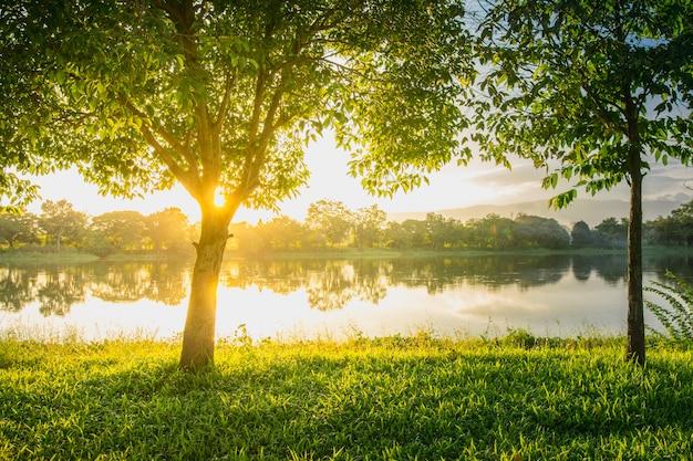 Trees near lake and green grass where light shines