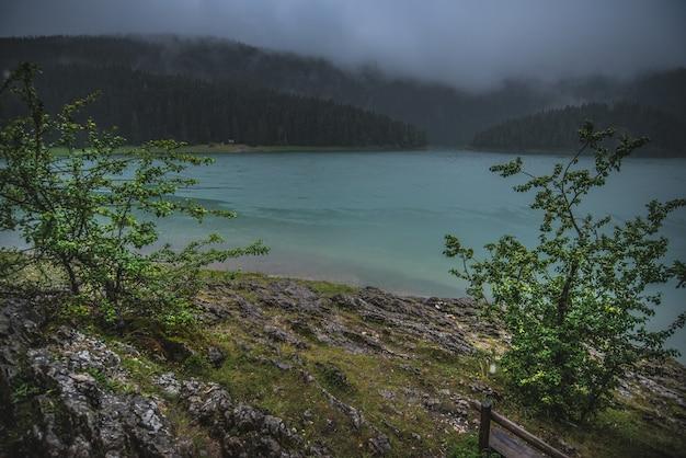 雨と曇りの天候でモンテネグロの黒い湖の近くの木