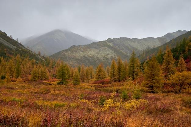 乾燥した黄色の葉で覆われた森の中で隣り合った木