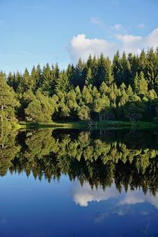 黒い森の木々は、ドイツのブリンデンゼーの澄んだ暗い水に映っています。