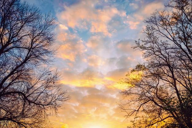 太陽の光線で雲と色鮮やかな美しい夕日の背景の木