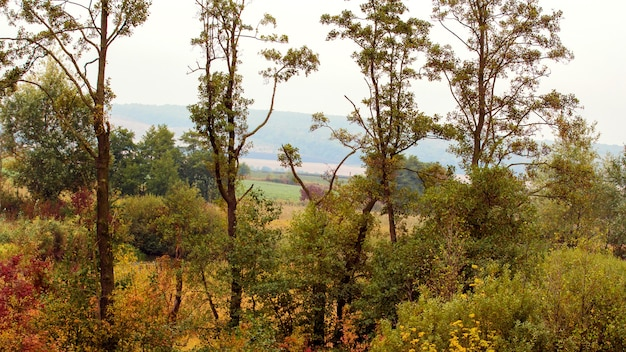 初秋の森の端の木々