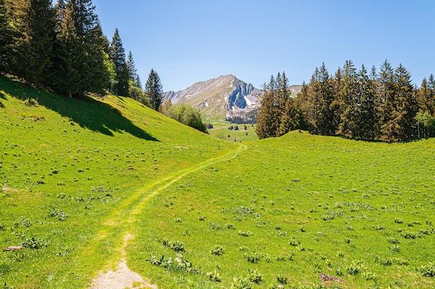 Деревья в горах свизских альп в швейцарии