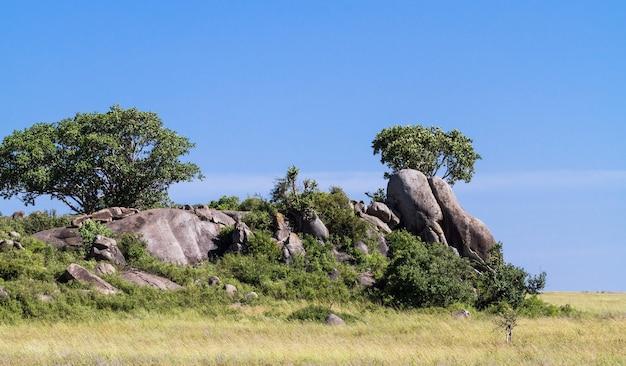 セレンゲティの岩の上の木。タンザニア、アフリカ