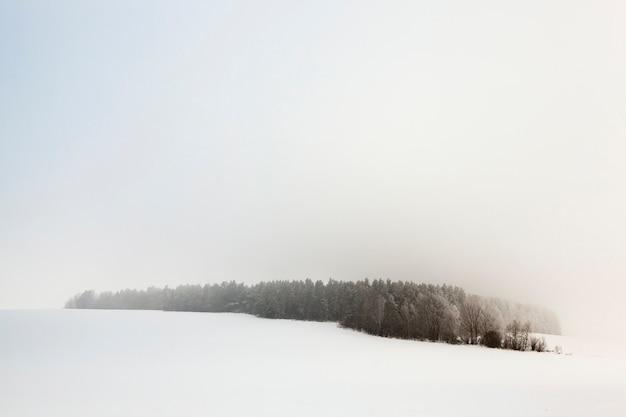 Деревья, сфотографированные зимой после снежной бури, земля покрыта снегом, фермерское поле и лес