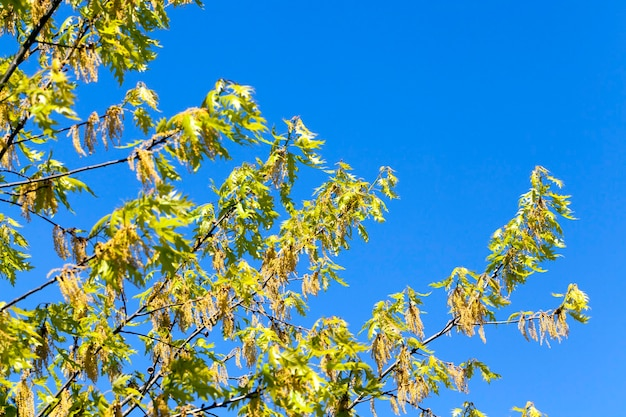 Trees and plants on the background of blue sky in the bright sunny weather
