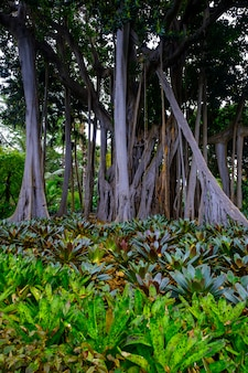 Trees and plants in the botanical garden. dense green vegetation in the botanical garden. tenerife. spain.