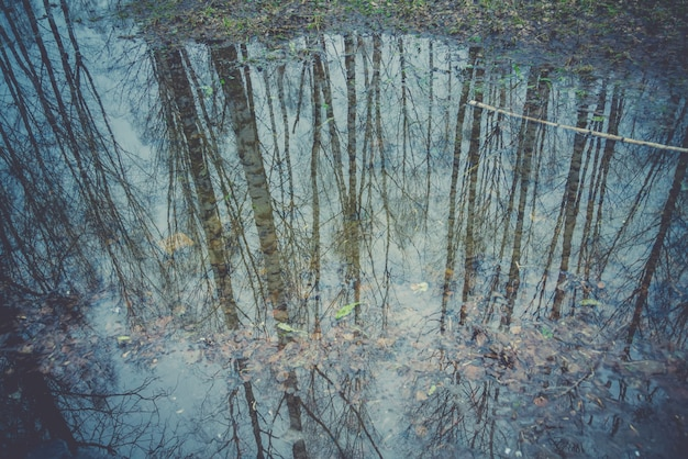 Trees reflected in puddle retro