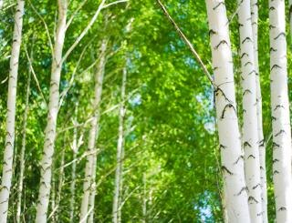 Trees, scenery