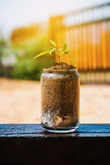 Trees or seedling are growing on pile of coins money in a glass jar.