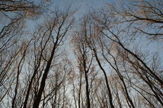 Trees shot upward