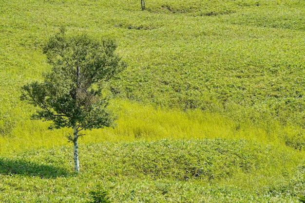 晴れた日に牧草地に立っている木