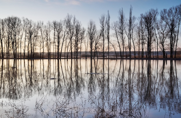 Trees standing in water during a spring high water