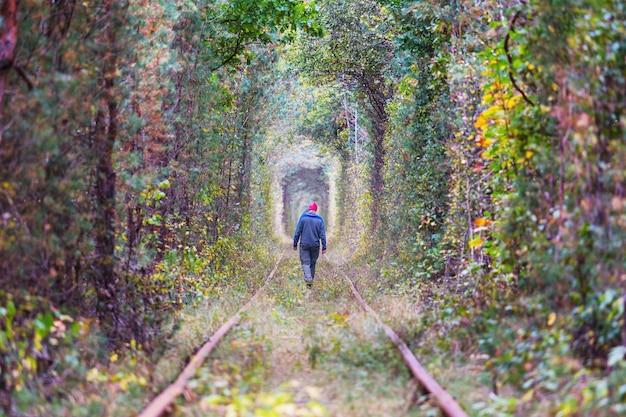 初秋の樹木トンネル