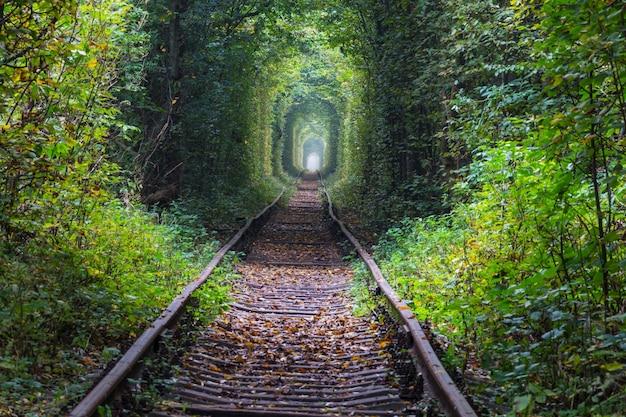 Туннель деревьев в начале осеннего сезона