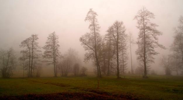 灰色の空の下の木