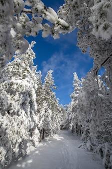 雪の中の木