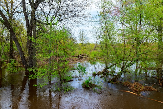 Trees walkway flooded after the rain.