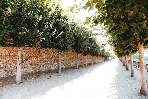 보도 주변의 나무 벽. 나무와 골목. 돌 또는 벽돌 벽 또는 울타리.
