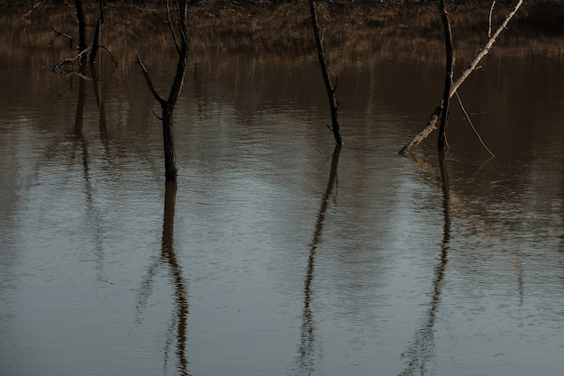 Trees in the water during the flood of the river