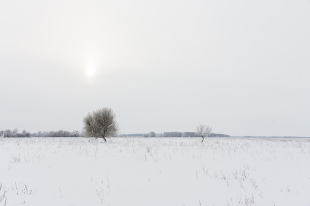 Trees and the winter landscape