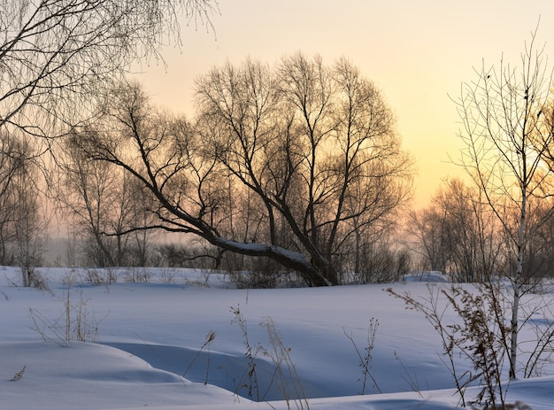 Trees on a winter morning