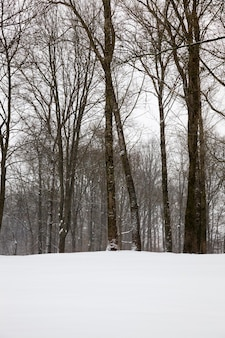 Trees in the winter season in the forest