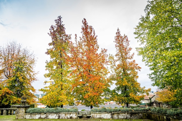 Trees with autumn season colors in the city of braga, portugal.